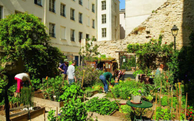 Rooftop gardens are painting the Parisian landscape green